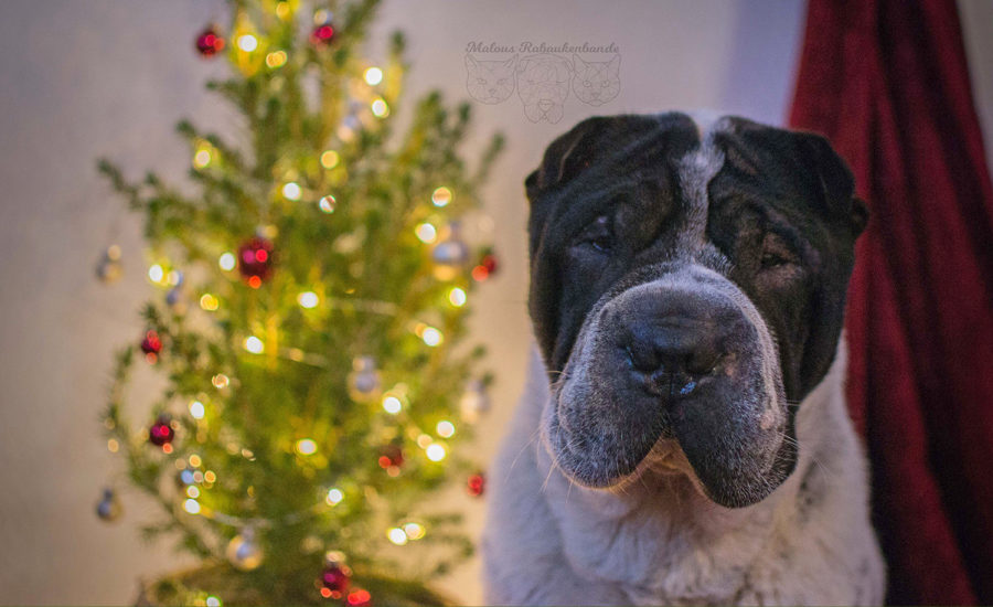 Weihnachten mit Hund Geschenke Tipps fuer Hunde Liebhaber Gewinnspiel Verlosung-Tier Blog Rabaukenbande Begleiter zum zufriedenes Leben mit Katzen Shar Pei