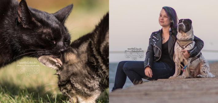 Rabaukenbande 2018 Hund Tier Katze Kater blog Erziehung Tipps Alltag Spass Artgerecht Zufrieden - neues Jahr Ziele Haustier Glueck Vorsaetze Zufriedenheit Ausblick Rueckblick