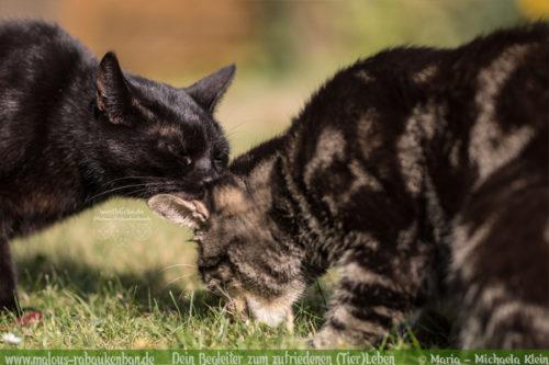 Rabaukenbande 2018 Hund Tier Katze Kater blog Erziehung Tipps Alltag Spass Artgerecht Zufrieden - neues Jahr Ziele Haustier Glueck Vorsaetze Zufriedenheit Liebe Geschwister