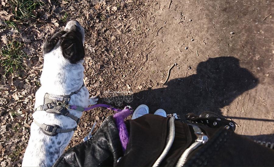 Rabaukenbande Hund Tier Katze Kater blog Erziehung Tipps Alltag Spass - Spaziergang mit Leine Fuehrigkeit Handgelenk Gassi sanftes feinfuehliges Training