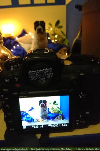 Rabaukenbande Hund Tier Katze Kater blog Erziehung glueckliches artgerechtes Leben - Gewinnspiel Weihnachten Feiertage Bloggerleben Bloghund Shar Pei