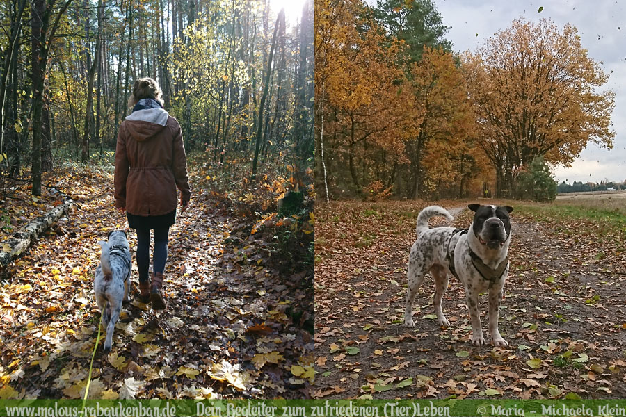 Rabaukenbande Hund Tier Katze Kater blog Erziehung glueckliches artgerechtes Leben - Happy Pet Day Ausflug Winsen Herbst Shar Pei Gassi Spaziergang