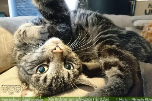 Rabaukenbande Hund Tier Katze Kater blog Erziehung glueckliches artgerechtes Leben - Soziales Wesen Shar Pei teilen dreist Koerbchen besetzen