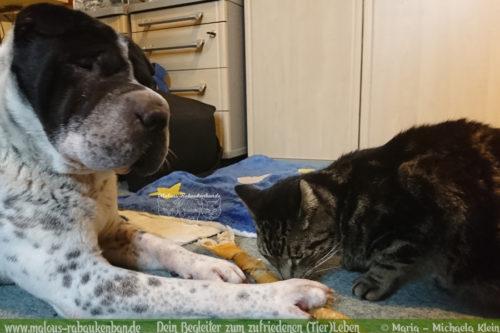 Rabaukenbande Hund Tier Katze Kater blog Erziehung glueckliches artgerechtes Leben - Soziales Wesen Shar Pei teilen zu zweit dreist Leckerli klauen