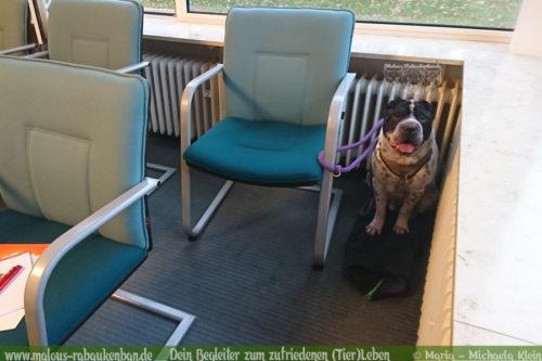Rabaukenbande Hund Tier Katze Kater blog Erziehung glueckliches artgerechtes Leben - Tagebuch Buerohund Praesentation Ausflug Ruhe Gelassenheit trainieren Arbeiten