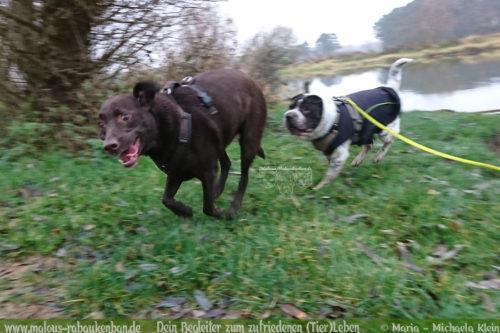 Rabaukenbande Hund Tier Katze Kater blog Erziehung glueckliches artgerechtes Leben - Tagebuch Labrador Ruede Freunde Hundetreffen Niedersachsen