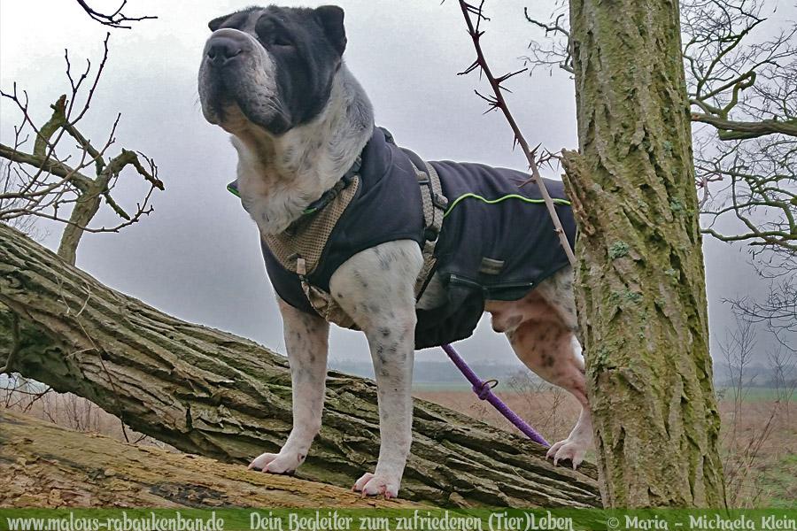 Hunde Blog Haus Tier Glueck Zufriedenheit Artgerechtes Leben Malous Rabaukenbande-Tagebuch Shar Pei Labrador Grossstadt Berlin Fotografie Quality time Ausflug unterwegs