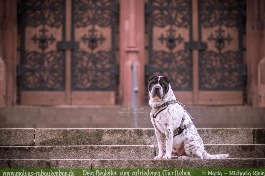 Rabaukenbande Shar Pei Hund Tier Katze Kater blog Erziehung Tipps Alltag Spass - Freiburg Harz Brocken Ausflug Urlaub Kirche Stadt Shooting Tagebuch