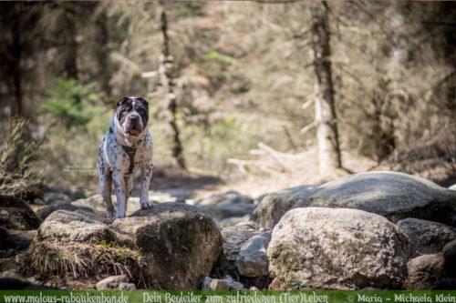 Rabaukenbande Shar Pei Hund Tier Katze Kater blog Erziehung Tipps Alltag Spass - Freiburg Harz Brocken Bahn Ausflug Urlaub Wandern Shooting Tagebuch