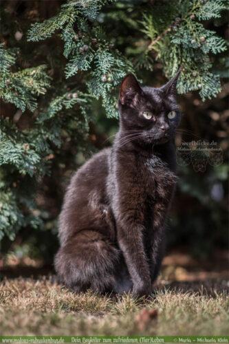 Haus Tier Blog Hunde Katzen Glueck Zufriedenheit Artgerechtes Leben Malous Rabaukenbande-Gruende gegen fuer Katzen Adoption Haltung Allergie Bediensteter Kaputt Kosten Gesundheit verwoehnt