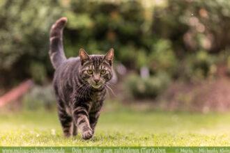 Haus Tier Blog Hunde Katzen Glueck Zufriedenheit Artgerechtes Leben Malous Rabaukenbande-Gruende gegen fuer Katzen Adoption Haltung Allergie Bediensteter Kosten Gesundheit Freigaenger