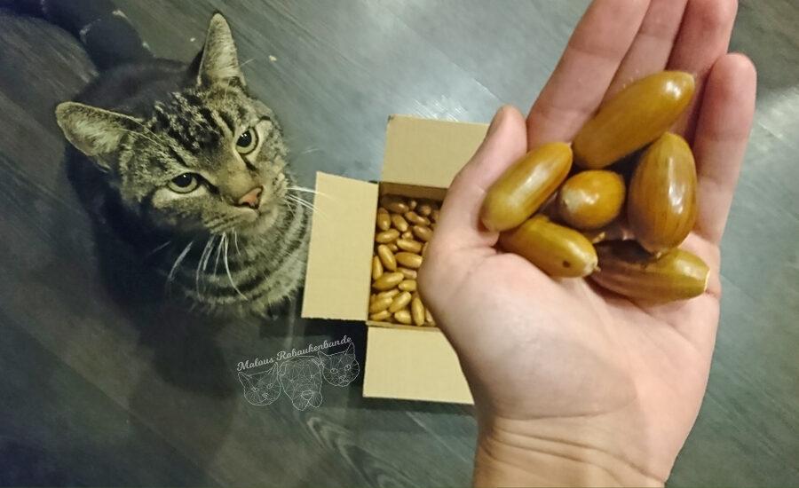 Spiel Schnueffeln Beschaeftigung Herbst Eicheln einfache Anleitung schnell basteln-Tier Blog Hunde Katzen Malous Rabaukenbande zufriedenes Leben Arbeit Freizeit Gesundheit Erziehung