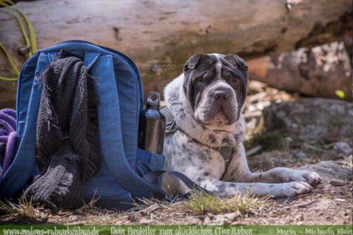 Pause mit Hund/Shar Pei beim Wandern im Harz