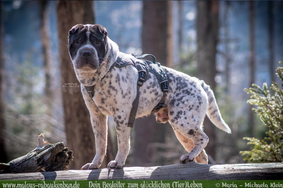 Wandern im Harz mit Hund zum Brocken