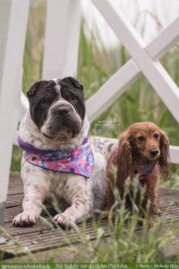 DIY Halstuch Weihnachtsgeschenke fuer Hunde Halter-Malous Rabaukenbande Tier Blog Erziehung glueckliches Leben Urlaub Reise