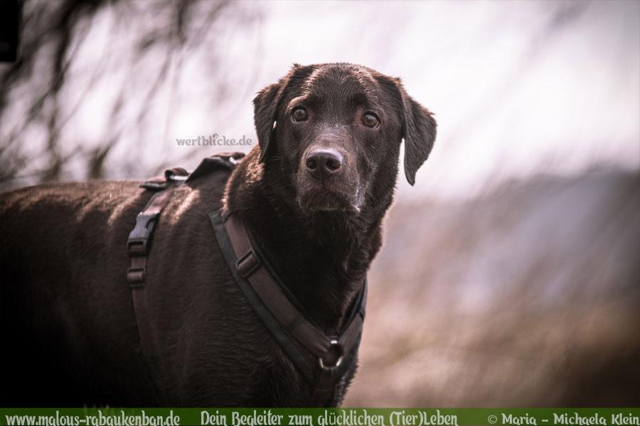 Anti Schwarz Weiß Gegen Vorurteile Hund besser verstehen zufriedenes Leben-Labrador Lebensweise-Hunde Katzen Blog Haustier Rabaukenbande Erziehung Erziehung Wandern Urlaub