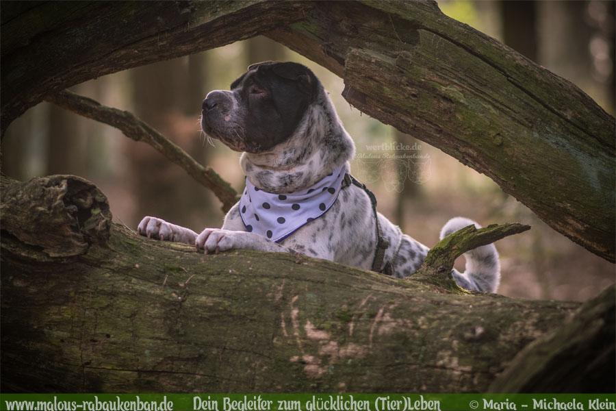 Anti Schwarz Weiß Gegen Vorurteile Hund besser verstehen zufriedenes Leben-Shar Pei Lebensweise-Hunde Katzen Blog Haustier Rabaukenbande Erziehung Erziehung Wandern Urlaub