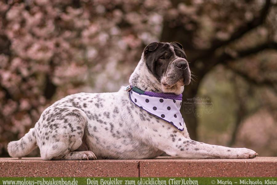 April Tagebuch 2019 Geschichten aus dem Leben Tipps-Fruehling Freiburg-Hunde Blog Haltung Haustier Rabaukenbande Erziehung Training Wandern Urlaub