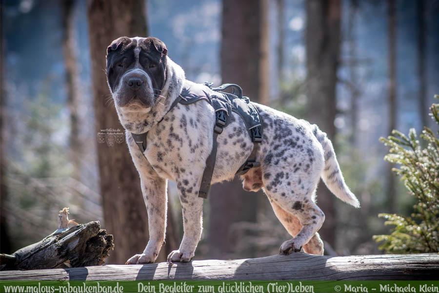 April Tagebuch 2019 Geschichten aus dem Leben Tipps-Shar Pei Brocken-Hunde Blog Haltung Haustier Rabaukenbande Erziehung Training Wandern Urlaub