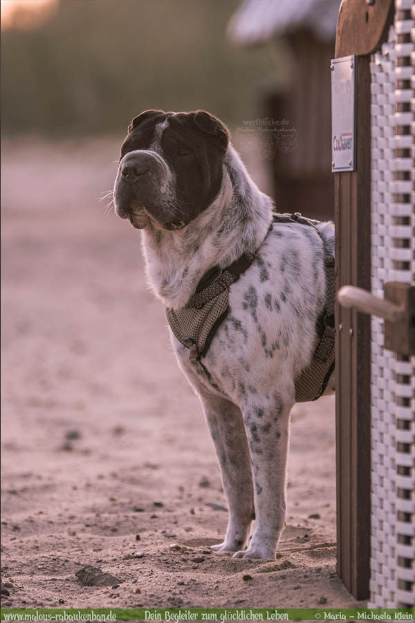 August Tagebuch 2019 Geschichten aus dem Leben Tipps-Cuxhaven Nordsee-Hunde Blog Haltung Haustier Rabaukenbande Erziehung Training Wandern Urlaub