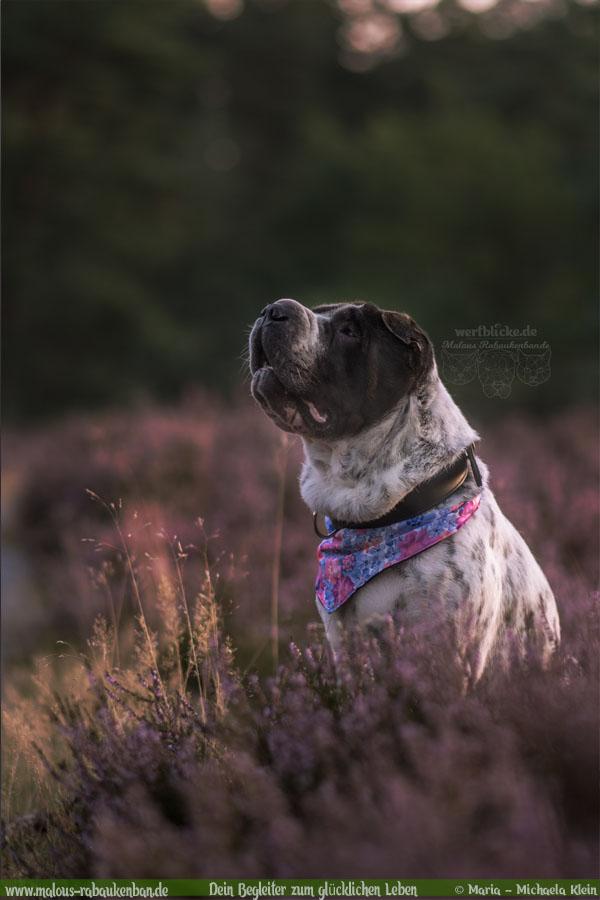 August Tagebuch 2019 Geschichten aus dem Leben Tipps-Lueneburger Heide-Hunde Blog Haltung Haustier Rabaukenbande Erziehung Training Wandern Urlaub