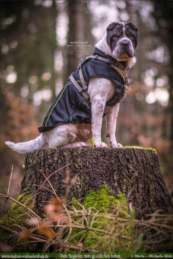 Februar Tagebuch 2019 Geschichten aus dem Leben Tipps-Wald Portrait-Hunde Blog Haltung Haustier Rabaukenbande Erziehung Training Wandern Urlaub