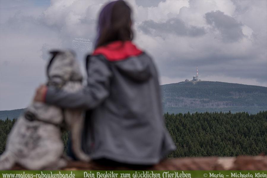 Juli Tagebuch 2019 Geschichten aus dem Leben Tipps-Ausblick Brocken-Hunde Blog Haltung Haustier Rabaukenbande Erziehung Training Wandern Urlaub