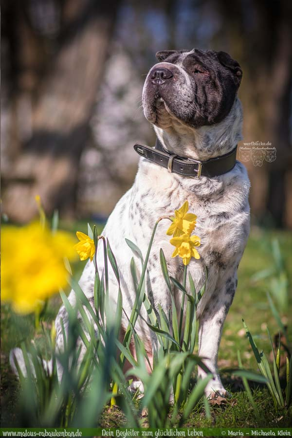 Maerz Tagebuch 2019 Geschichten aus dem Leben Tipps-Frueling Niedersachsen-Hunde Blog Haltung Haustier Rabaukenbande Erziehung Training Wandern Urlaub