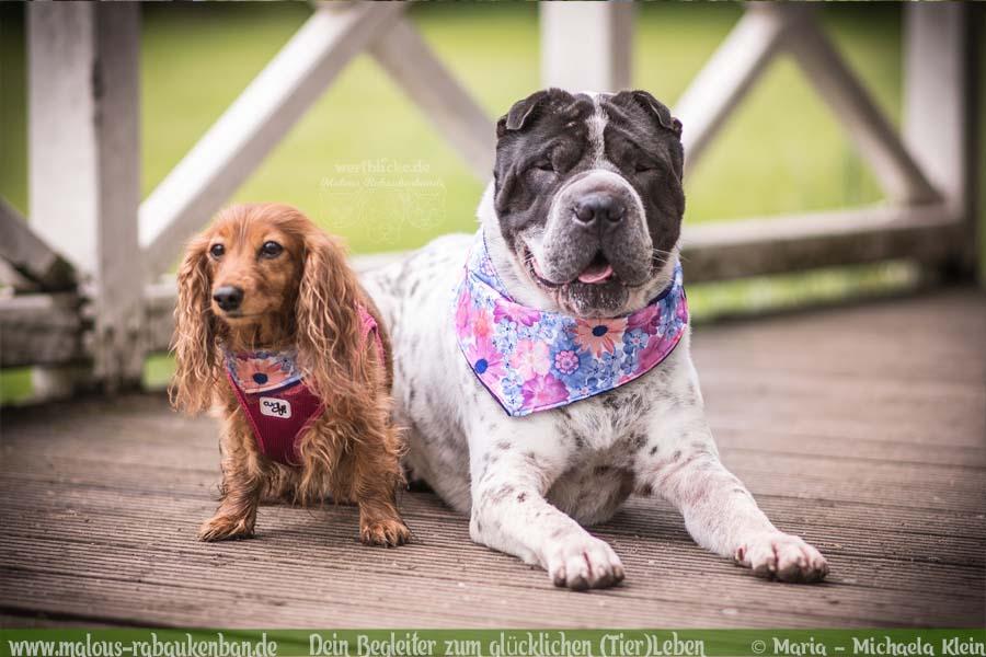Mai Tagebuch 2019 Geschichten aus dem Leben Tipps-Shar Pei Dackel Freunde-Hunde Blog Haltung Haustier Rabaukenbande Erziehung Training Wandern Urlaub