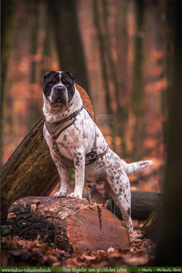 November Tagebuch 2019 Geschichten aus dem Leben Tipps-Herbst in Berlin-Hunde Blog Haltung Haustier Rabaukenbande Erziehung Training Wandern Urlaub