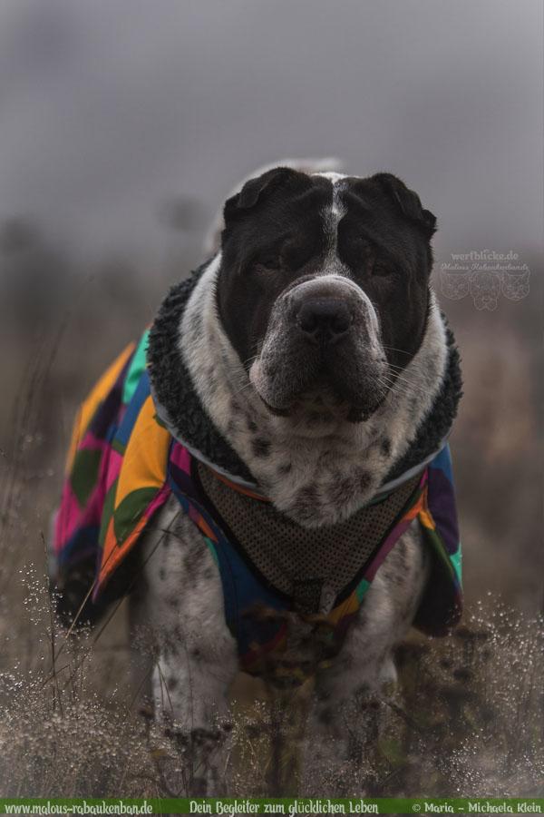 November Tagebuch 2019 Geschichten aus dem Leben Tipps-Nebel Herbst-Hunde Blog Haltung Haustier Rabaukenbande Erziehung Training Wandern Urlaub