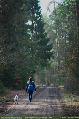Vorsaetze fuer neues Jahr 2020 Hund Katze-Hunde Katzen Blog Haustier Rabaukenbande Erziehung Training Wandern Urlaub Shar Pei