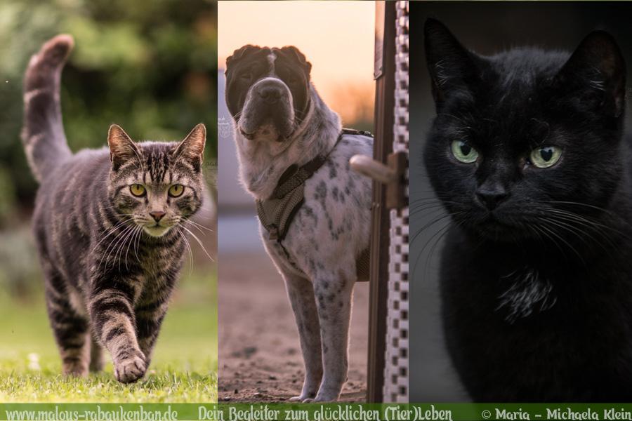 Vorsaetze fuer neues Jahr 2020 Hund Katze-Hunde Katzen Blog Haustier Rabaukenbande Erziehung Training Wandern Urlaub Shar Pei T