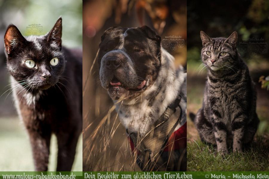 Vorsaetze fuer neues Jahr Ziele zufriendenes achtsames Leben-Beziehung Haustiere-Hunde Katzen Blog Haustier Rabaukenbande Erziehung Erziehung Wandern Urlaub