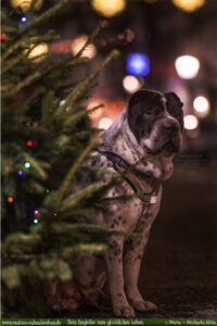 Vorsaetze fuer neues Jahr Ziele zufriendenes achtsames Leben-Neujahr Lichter-Hunde Katzen Blog Haustier Rabaukenbande Erziehung Erziehung Wandern Urlaub