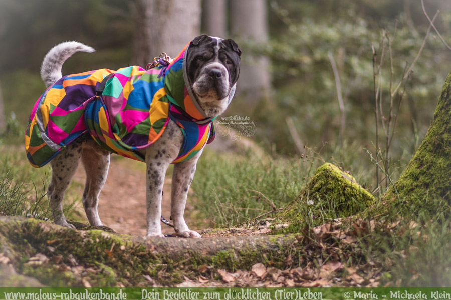 Wanderweg Lueneburger Heide Mueden Wald Erlebnis Fluss Pfad-Tier Hunde Katzen Blog Malous Rabaukenbande-Shar Pei Teich Wandern