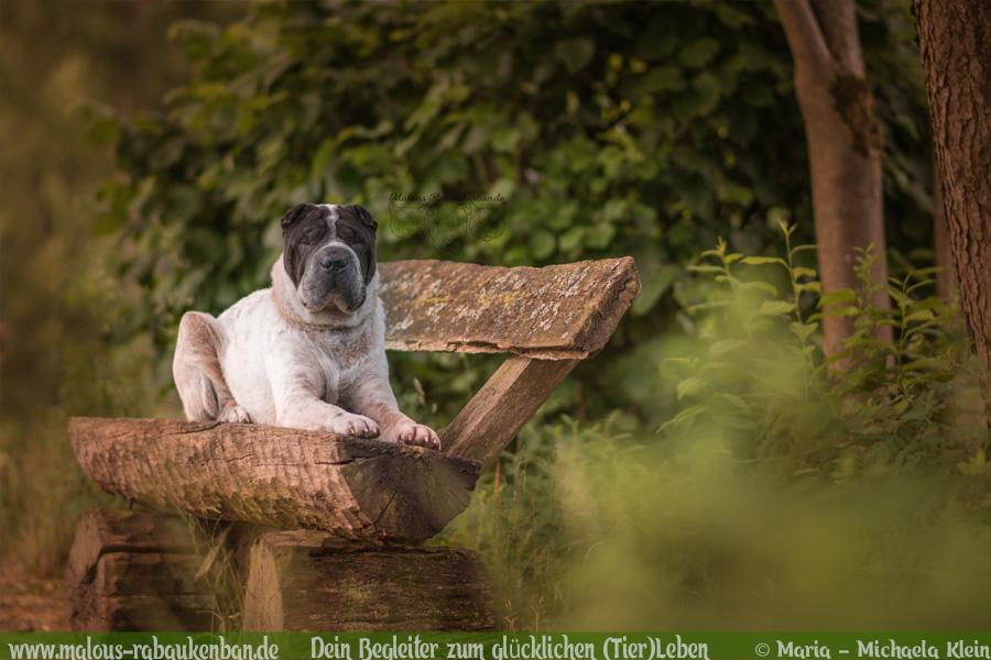 Wanderweg Lueneburger Heide Mueden Wald Fluss Erlebnis Pfad-Tier Hunde Katzen Blog Malous Rabaukenbande-Shar Pei Parkbank Pause