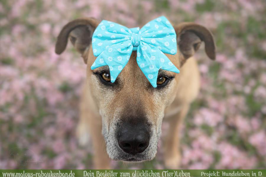 Leben im Ruhrpott NRW Molosser Lebensfreude Zweithund vom Zuechter Mehrhundehaushalt mit Huehnern-Cane Corso Mischling-Hunde Leben in Deutschland Malous Rabaukenbande Haustier Blog