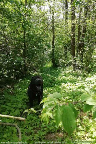 Leben mit Hund Zucht Deprivationsschaden aus schlechter Haltung Ruede Wald-Shar Pei Leopold-Hunde Leben in Deutschland Malous Rabaukenbande Haustier Blog