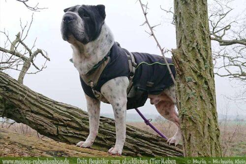 Stau Tipps keine Quaelerei sicher Auto fahren mit Hund-Abenteuer Pause-Hunde Blog Haltung Haustier Rabaukenbande Freizeit Urlaub Ausflug