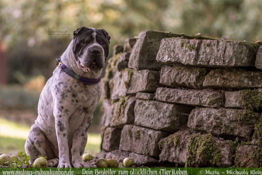 Stau Tipps keine Quaelerei sicher Auto fahren mit Hund-Burgruine-Hunde Blog Haltung Haustier Rabaukenbande Freizeit Urlaub Ausflug