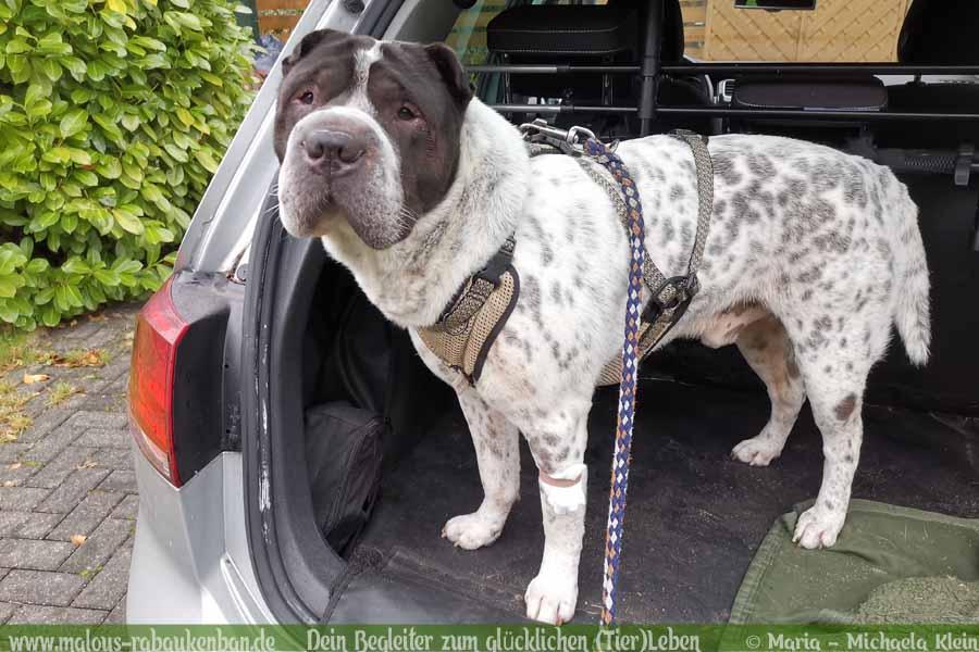 Stau Tipps keine Quaelerei sicher Auto fahren mit Hund-Kofferraum Verkleidung-Hunde Blog Haltung Haustier Rabaukenbande Freizeit Urlaub Ausflug