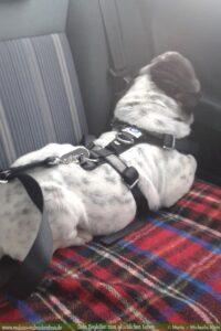 Stau Tipps keine Quaelerei sicher Auto fahren mit Hund-Welpen Rat-Hunde Blog Haltung Haustier Rabaukenbande Freizeit Urlaub Ausflug