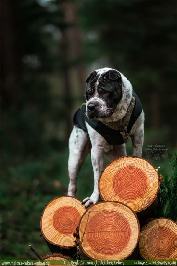 Geschichten aus HundeLeben Januar Februar Tagebuch 2020 Tipps Sprueche-Abenteuer Shar Pei-Hund Blog Haltung Haustier Rabaukenbande Erziehung Training Wandern Urlaub
