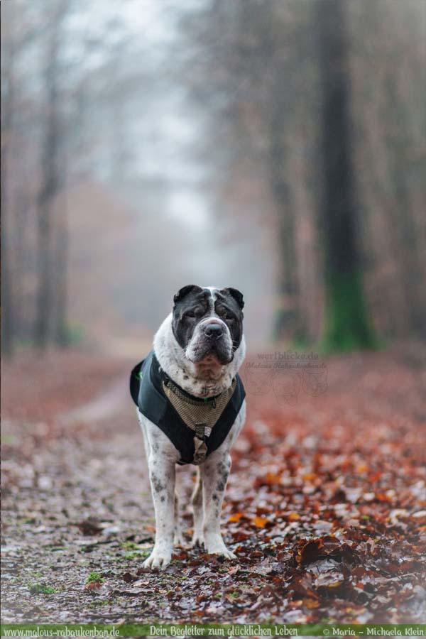 Geschichten aus HundeLeben Januar Februar Tagebuch 2020 Tipps Sprueche-Buchen Wald Portrait-Hund Blog Haltung Haustier Rabaukenbande Erziehung Training Wandern Urlaub