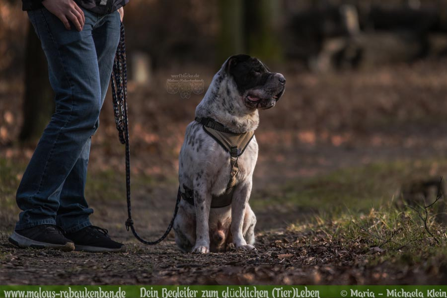 Geschichten aus HundeLeben Januar Februar Tagebuch 2020 Tipps Sprueche-Herrchen Männer Zeit-Hund Blog Haltung Haustier Rabaukenbande Erziehung Training Wandern Urlaub