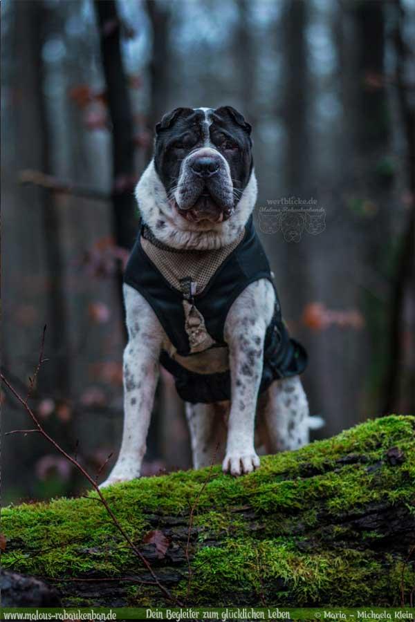 Geschichten aus HundeLeben Januar Februar Tagebuch 2020 Tipps Sprueche-Wald Portrait-Hund Blog Haltung Haustier Rabaukenbande Erziehung Training Wandern Urlaub