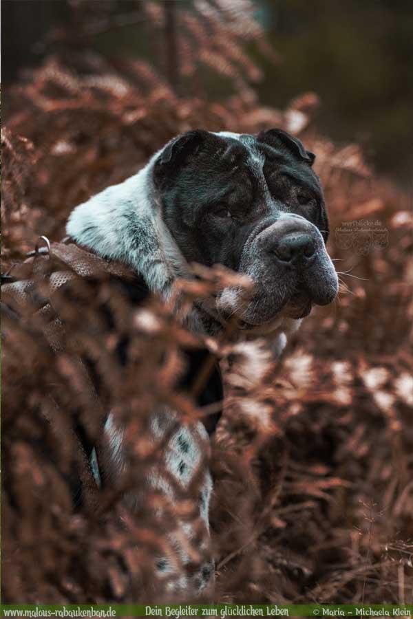 Geschichten aus HundeLebenJanuar Februar Tagebuch 2020 Tipps Sprueche-Farn Portraet-Hund Blog Haltung Haustier Rabaukenbande Erziehung Training Wandern Urlaub