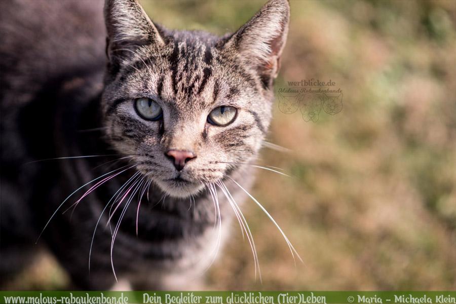 Kooperation Blogbeitrag Test Vertrauen Partner gesucht langfristig-Hunde Katzen Blog Haustier Rabaukenbande Erziehung Wandern Reisen Urlaub Backpacking Fotografie DIY (6)