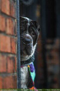 qualität gute Produkte fuer Haustiere--Kleine Unternehmen lokal unterstuetzen-Rabaukenbande Hunde Katzen Blog glueckliches Leben mit Tier